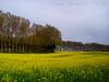 Kent, United Kingdom (imma_tomaselli) Tags: philigrinway kent viafrancigena canterbury yellow colors landscape paesaggi panorama trees sky clouds blue uk walk hiking walking escursione camminata camminare folk explorer