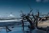 Ostsee  (23) (berndtolksdorf1) Tags: deutschland mecklenburgvorpommern ostsee strand weststrand baum sand meer wasser himmel sky outdoor