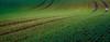Off the beaten track (Beppe Rijs) Tags: deutschland germany schleswigholstein schlei wolken wolkendecke frühling spring landschaft landscape natur nature field feld gras baum tree horizont horizon grün green