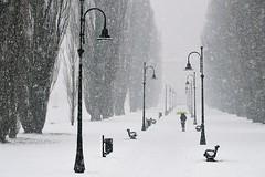 A volte ritorna (stefyBuff) Tags: snow parco winter inverno walking umbrella ombrello
