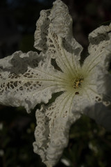 jdy254XX20170911a9093Bias-1 stop.jpg (rachelgreenbelt) Tags: ghigreenbelthomesinc usa eudicots greenbelt northamerica midatlanticregion rosids familycucurbitaceae ordercucurbitales cucurbitaall maryland americas cucurbita cucurbitaceae cucurbitaceaefamily magnoliophyta floweringplants gourd melon oneplant pumpkin singleplantportrait spermatophytes squash 31court