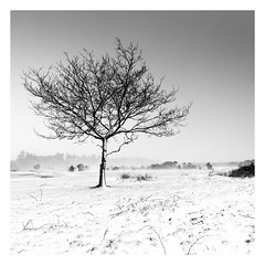 Fortitude (Robgreen13) Tags: landscape bw monochrome trees snow dartmoor