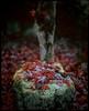 Fin de l'automne #22 (moonchild1111) Tags: fujiprovia100f linhofsupertechnika schneiderlinhofxenotar150mmf28 4x5 autumn largeformat