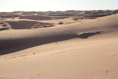 Marokko Dez17 Jan18 161 (izzaga) Tags: marokkodez17jan18 sand dunes desert sahara morocco maroc