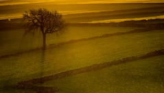 Lone Tree (Peter Quinn1) Tags: sunrise litton drystonewalls derbyshire whitepeak peakdistrict mist shadow skeleton