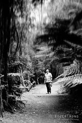 20180114-06-The vanishing (Roger T Wong) Tags: 2018 australia bw hobart mtwellington pipelinetrack rogertwong sel85f18z sony85mmf18 sonya7ii sonyalpha7ii sonyfe85mmf18 sonyilce7m2 tasmania blackandwhite mono monochrome outdoors portrait walk