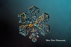 IMG_2491 (nitinpatel2) Tags: snowflakes winter snow macro crystal nature nitinpatel