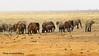 Safari-Tsavo National Park-Kenya (1) (johnfranky_t) Tags: elefanti savana johnfranky t uccelli zanne avorio lumixtz40