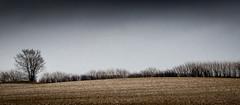 The One in the Row (Beppe Rijs) Tags: deutschland germany schleswigholstein schlei wolken wolkendecke landschaft landscape natur nature field feld baum tree horizont horizon clouds farbig colored line rural ländlich fertile fruchtbar color farbe acker