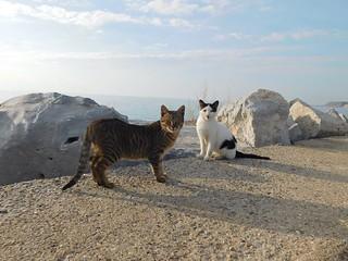Γάτες & Cats
