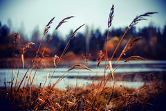 MDD_8396 (Dmitry Mahahurov) Tags: nikon d300 mahahurov tosno
