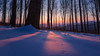 Over the Trees (Janos Puskas) Tags: winter snow snowyforest cold sun sunlight sunrise forest beechforest uwa tokina116 tokina1116 outdoor