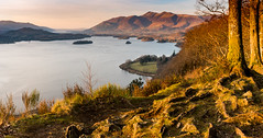 Skiddaw and Derwent Water from Surprise View (Peter Quinn1) Tags: skiddaw derwentwater surpriseview lakedistrict cumbria keswick borrowdale goldenhour sunset roots evening winterevening bassenthwaite islands lake