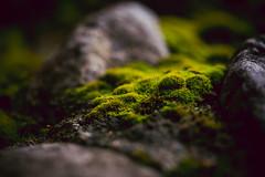 moss & rocks [Day 3296]