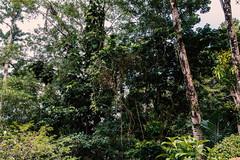 Rainforest St. Lucia (FOXTROT|ROMEO) Tags: stlucia saintlucia caribbean karibik street hurricane woods trees nature reportage travel