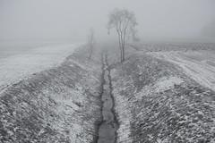 divide (Mindaugas Buivydas) Tags: lietuva lithuania color winter december fog mist tree trees birch minimal minimalism sadnature mood moody mindaugasbuivydas