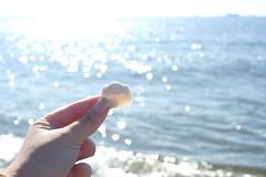 XPRO4149 (keiko.com) Tags: xpro2 xf35 35mm japan chiba beach shell hand day