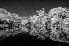 Brazil (wolfgang.brinken) Tags: brazil rio negro rainforest regenwald brasilien wasser bäume trees river fluss infrared blackwhite wolfgang brinken olympus pen landscape