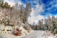 Winter in our area - 4 (GerWi) Tags: himmel sky schnee snow bäume trees forest wanderweg wolken clouds beautifullandscapes landschaften fz1000 schneebilder wandern wanderwege dasgrüneband ehemaligedeutschdeutschegrenze deutsch dreiländereck