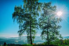 The Photographer (*Capture the Moment*) Tags: 2017 autumn fotowalk herbst panoshot panoramablick panoramaview sonne sonya7m2 sonya7mii sonya7mark2 sonya7ii sonyfe2470mmf4zaoss sonyilce7m2 sun wetter analog analogue