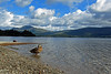 Loch Lomond (v seger) Tags: loch lomond luss scotland uk lake water sky cumulus afternoon