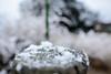 Elurra badalona (aritz.bris) Tags: nieve invierno frio febrero hotza negua otsaila catalunya badalona winter cold snow elurra nikon nikond610 35mm flicker