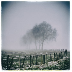 (philippe baumgart) Tags: alsace field fog forest hilsenheim landscape morning ried trees