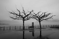 "Rainy Day (Svend RS) Tags: sonyilce7m2 sonya7 alpha a7m2 1224mm40 fe1224mmf4g sel1224g zoom wideangle ultrawideangle lake rain blackandwhite monochrome noiretblanc ""artinbw"" biancoenero blancoynegro streetphotography"