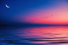 Don't let the (gusdiaz) Tags: photoshop photomanipulation digital art arte relaxing peaceful beautiful reflection mar oceano reflejo amanecer atardecer luna cielo moon birds aves seagulls