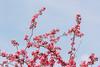 april 2017 lake katherine (timp37) Tags: tree flowers illinois palos lake katherine april 2017