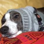 Borys wearing chihuahua jumper