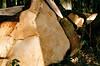 Maissau (Harald Reichmann) Tags: niederösterreich maissau wald baumstamm holz linie organisch wachstum querschnitt analog film holzbringung olympusom4 alter