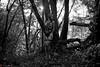 IMG_0051-2 (m.acqualeni) Tags: manuel manu acqualeni photographe thrash trash fille femme girl nu nude horreur masque mask oxygène art alternative alternatif modèle model tattoo gothique gothic sm gaz fétichiste fetish foret forest nature