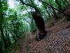 On my way (Alberto González 13) Tags: tree verde arbol hojas leaves leaf retorcido camino way selva bosque