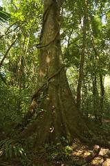 A Walk In The Lacandon Rainforest (elhawk) Tags: rainforest lacandonforest lacandon lacanjachansayab chiapas mexico