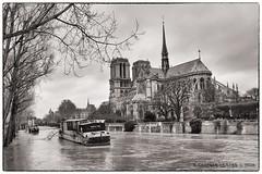 Marée haute à Paris (Laurent CLUZEL) Tags: nikon d610 2470 28 paris notre dame seine river crue janvier 2018 bw nb nouvelle cabaret burlesque