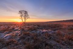 Cold mornings (nldazuu.com) Tags: vorst natuur sunrise winter heath gelderland canon cameranu heidelandschap zonsopkoms blog heide landschap nldazuufotografeertcom rijp davezuuring benrobasmeelkerkitblogreview ginkelseheide benrofiltersuniversal heather koudemorgen winter2018 cameranunl