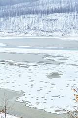 Medicine Lake, Jasper National Park (aud.watson) Tags: canada alberta jasperregion jasper jaspernationalpark canadianrockies medicinelake malignelakeroad subalpineforest park reserve wildlifereserve nationalpark mountain mountains mountainside valley valleys glacialvalley sandstone shale colinrange limestone elizabethrange dryforestedmontane malignerange winter snow ice mist tree trees moss lichen lake water shore meltwaterfromreplicapeak meltwater glacierfedlake