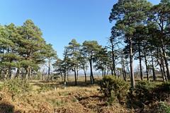 24.02.2018 Arne (14) (Kotatsu Neko 808) Tags: arne dorset england uk spb rspbarne view scenery