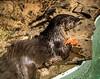 Love me some fresh salmon . . . (Dr. Farnsworth) Tags: riveer otter mammal swimming eating salmon wet fur dinner destin fl florida winter january2018