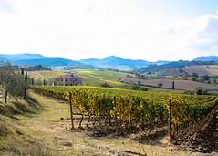 Montepulciano (jmigs88) Tags: italy montepulciano tuscany toscana it travel italian wine country italiancountryside