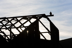 perch (eb78) Tags: ca california montezumahills rural barn abandoned ruin decay