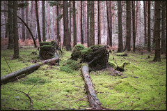 wood (steve-jack) Tags: nikon f5 50mm fujicolour c200 film 135 wood forest moss tetenal c41 kit epson v500