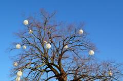 Alternative Christmas Tree [Riquewihr - 7 December 2017] (Doc. Ing.) Tags: 2017 france alsace grandest basrhin sélestaterstein alsacewineroute christmastree sky blue whitebaubles upperrhine riquewihr