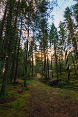 Forest Crossing (Khanghoang2003) Tags: 2017 canonef1635f4lisusm canoneos6d färgelanda korsning kullberg landskap natur skog stig träd vinter lillesäter västragötalandslän sverige se