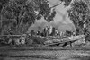 Apocalypse (Michael F. Nyiri) Tags: kennethhahnstaterecreationarea skyline blackandwhite cityscape city palmtrees monochrome arty