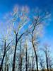 My front yard! (Kathy@dornickdesigns) Tags: kathyhardyphotography lifeintheforest myfrontyard winter2018 topazlabs digitalpainting trees