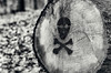 death skull on a tree (Silaris Inc.) Tags: schwarzweis autorevuenon50mmf19 totenkopf outdoor baumstamm wald holz graffiti