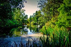 The Lake (MrBlueSky*) Tags: lake water trees green outdoor nature view kewgardens royalbotanicgardens london pentax pentaxart pentaxlife pentaxawards pentaxflickraward pentaxistd aficionados