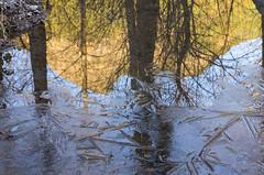 Rattlesnake Peak Reflection (s.d.sea) Tags: rattlesnake lake mountains cascades alpine water landscape pnw pacificnorthwest washington washingtonstate morning sunrise north bend outdoors outside pentax k5iis blue trees forest winter cold chilly frost ice reflection puddle frozen peak ridge ledge